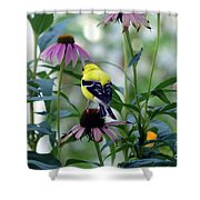 Goldfinch Visiting Coneflower Shower Curtain