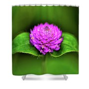 Gomphrena - Globe Flower 003 Shower Curtain