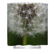 Gone To Seed - Color Shower Curtain