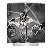 Gone To Seed Berries And Vines Shower Curtain