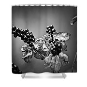 Gone To Seed Blackberry Lily Shower Curtain