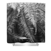 Gone To Seed Clematis Shower Curtain