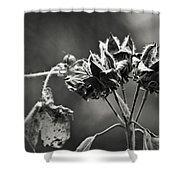 Gone To Seed Hibiscus Shower Curtain