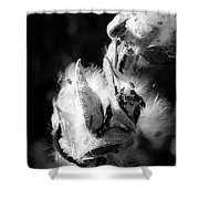 Gone To Seed Milkweed 1 Shower Curtain