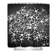 Gone To Seed Phlox Shower Curtain
