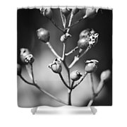 Gone To Seed Rose Hips Shower Curtain