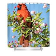 Good Morning Mr Cardinal  Shower Curtain