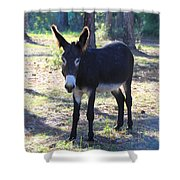 Good Morning Mule Shower Curtain