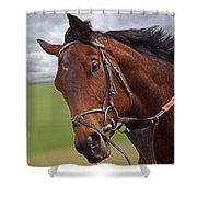 Good Morning - Racehorse On The Gallops Shower Curtain
