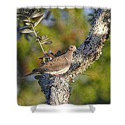Good Mourning Dove By H H Photography Of Florida Shower Curtain