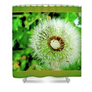 Good Wishes Shower Curtain