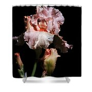 Goodnight Kiss Iris  Shower Curtain