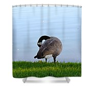 Goose #1 Pose Shower Curtain