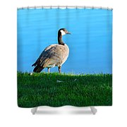 Goose #3 Pose Shower Curtain