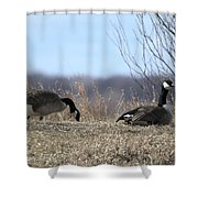 Goose And Gander Shower Curtain