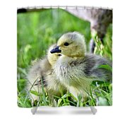 Goose Chick Shower Curtain
