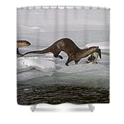Goose For Lunch-signed-#1133 Shower Curtain