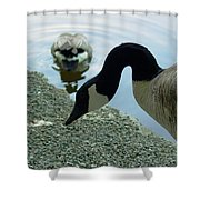 Goose Neck Shower Curtain