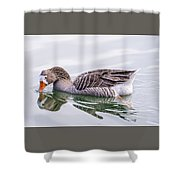 Goose Swimming Shower Curtain