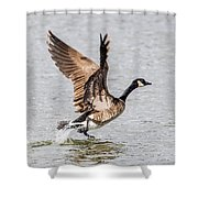 Goose Takeoff Shower Curtain