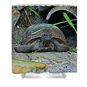 Gopher Tortoise II Shower Curtain