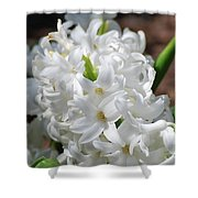 Goregeous White Flowering Hyacinth Blossom Shower Curtain