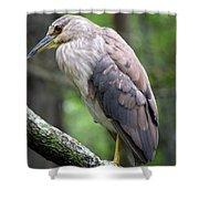 Gorgeous Bird Shower Curtain