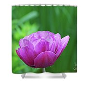 Gorgeous Blooming And Flowering Dark Pink Parrot Tulip Shower Curtain