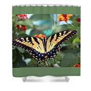 Gorgeous Butterfly Shower Curtain