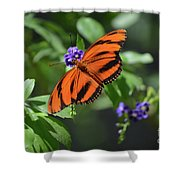 Gorgeous Close Up Of An Oak Tiger Butterfly In Nature Shower Curtain