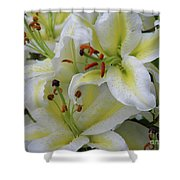 Gorgeous Cluster Of Blooming White Lilies In A Bouquet Shower Curtain