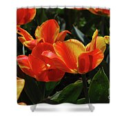 Gorgeous Flowering Orange And Red Blooming Tulips Shower Curtain