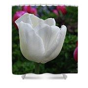 Gorgeous Flowering White Tulip Flower Blossom Shower Curtain