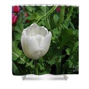 Gorgeous Flowering White Tulip In A Spring Garden Shower Curtain
