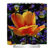 Gorgeous Flowering Yellow And Red Blooming Tulip Shower Curtain