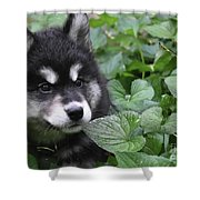Gorgeous Fluffy Alusky Puppy Peaking Out Of Plants Shower Curtain
