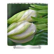 Best Buds Gorgeous Gardenia Flower Buds Shower Curtain