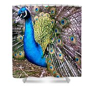 Gorgeous George Shower Curtain