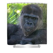 Gorgeous Gorilla Shower Curtain