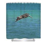 Gorgeous Grey Pelican With His Wings Extended In Flight  Shower Curtain