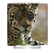 Gorgeous Jaguar Shower Curtain by Sabrina L Ryan