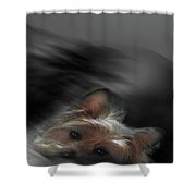 Yorkie Joy Painting Shower Curtain