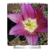 Gorgeous Light Purple Tulip With Yellow Stamen Shower Curtain
