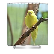 Gorgeous Little Yellow Parakeet Living In The Wild Shower Curtain