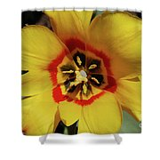 Gorgeous Look At The Center Of A Yellow Tulip Shower Curtain