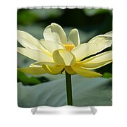 Gorgeous Lotus Flower Shower Curtain