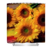 Gorgeous Lovely Sunflowers Shower Curtain