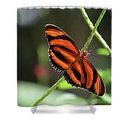 Gorgeous Orange And Black Oak Tiger Butterfly Shower Curtain