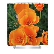 Gorgeous Orange California Poppies Shower Curtain