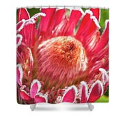 Gorgeous Pink Protea Bloom  Shower Curtain